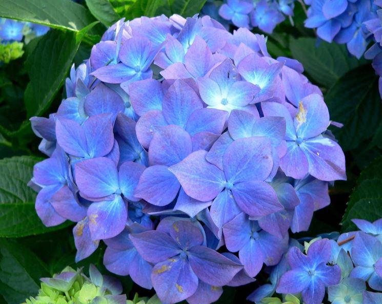 Sai riconoscere i fiori e le piante quiz sondaggi for Piante e fiori