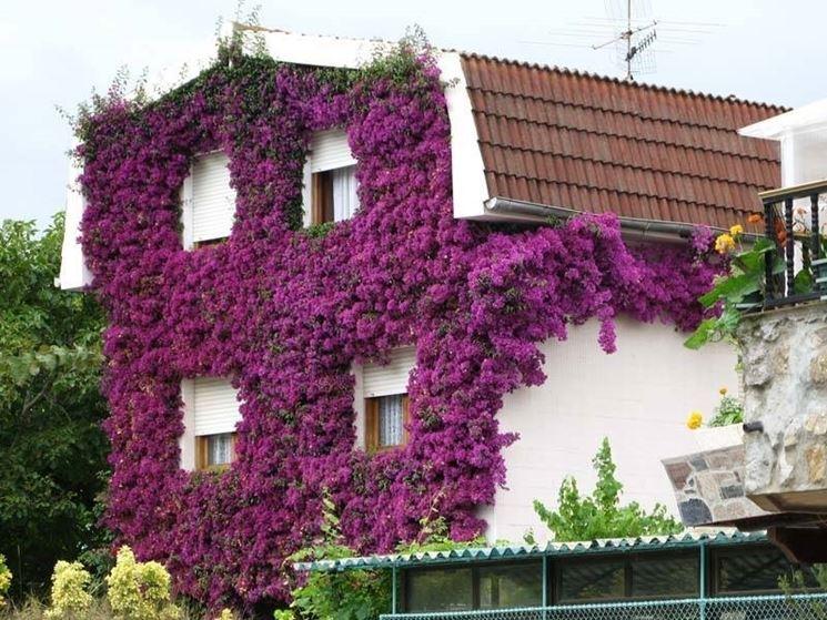 Casa ricoperta di bouganville
