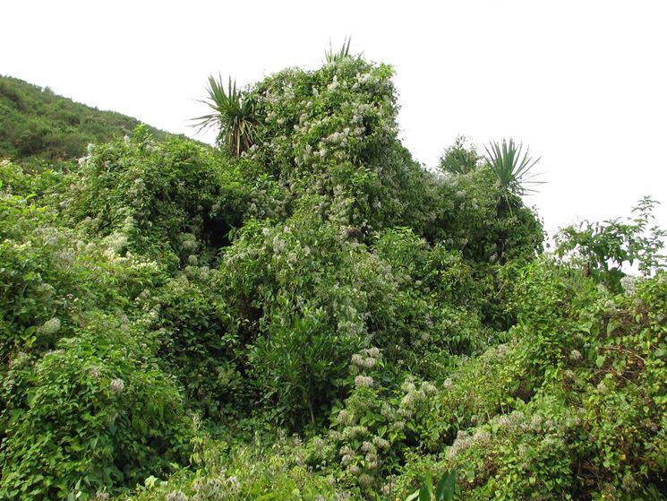 esempio di aggressione boschiva con soffocamento di arbusti