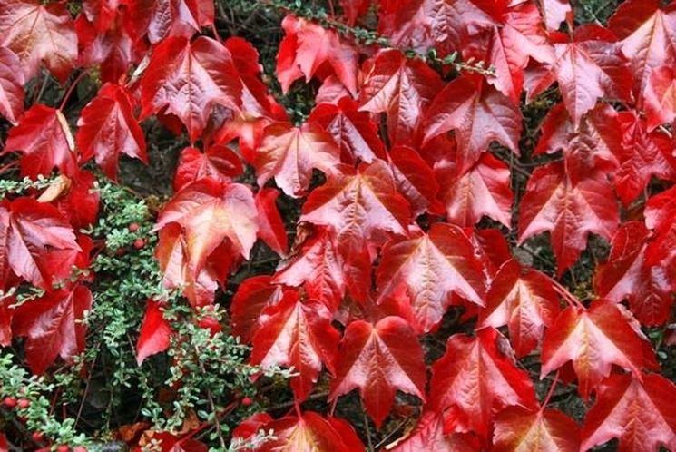 Colorazione delle foglie in autunno