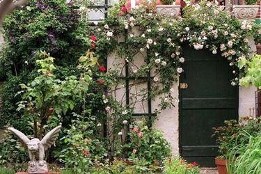 Rampicanti cresciute sostenendosi alla parete di un'abitazione, a scopo anche ornamentale.