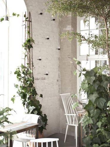 Esempio di arredamento interno con uso di piante rampicanti
