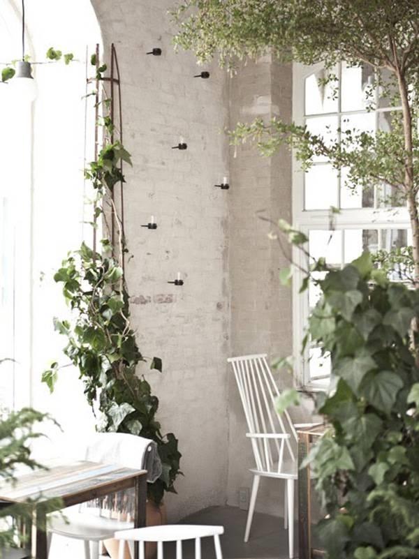 Piante rampicanti rampicanti caratteristiche piante - Piante rampicanti da interno ...