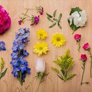 significato piante