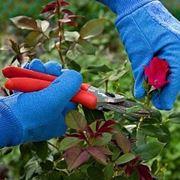 Una buona potatura migliora la qualit� della fioritura
