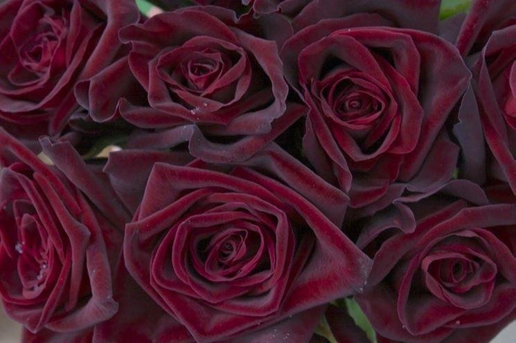 Rose Baccarat