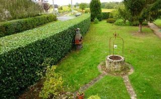 Arbusti da siepe siepi come creare una siepe con gli - Siepi ornamentali da giardino ...