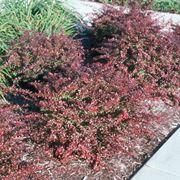 piante spinose