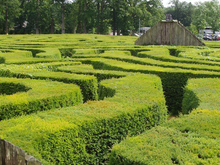 siepe lunga labirinto