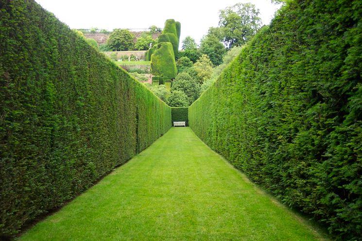 siepe lunga verde
