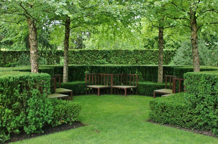 Siepi geometriche in un giardino all'italiana