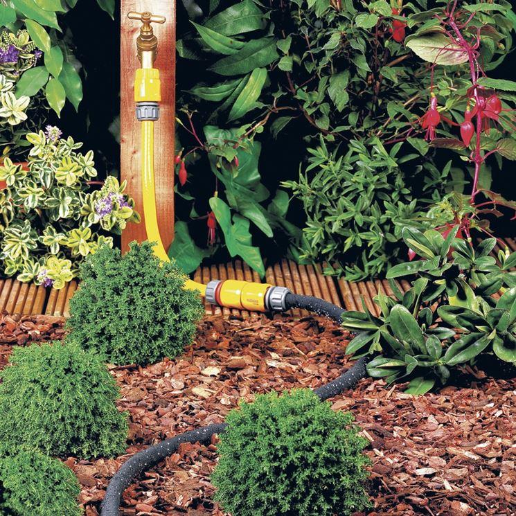 Le piante da siepe siepi coltivare siepe for Piante da siepe sempreverdi