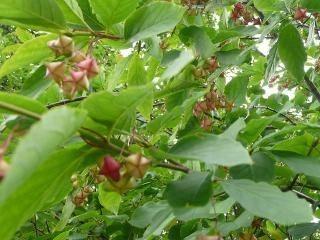 Piante da siepe prezzi siepi costi piante da siepe for Prezzi piante da giardino