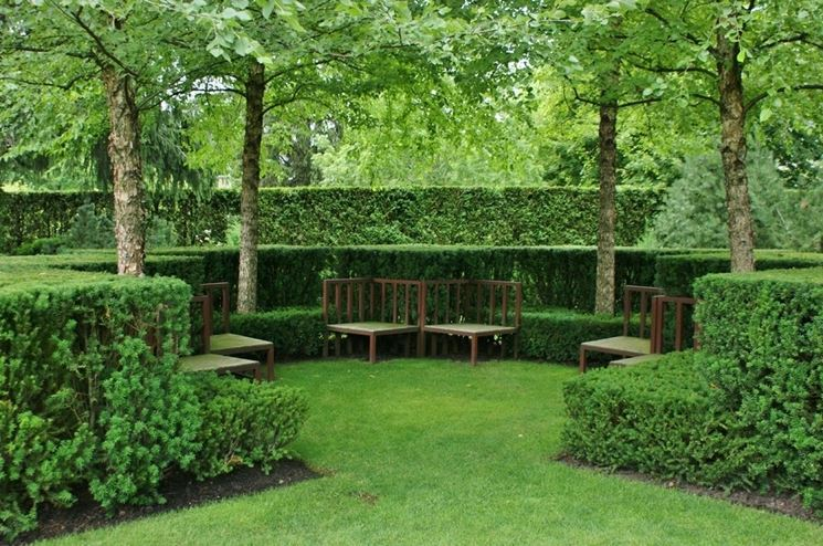 Siepe sempreverde da giardino siepi siepi da giardino for Siepe sempreverde