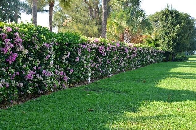 Siepi con fiori siepi come realizzare siepi con fiori for Giardino con fiori