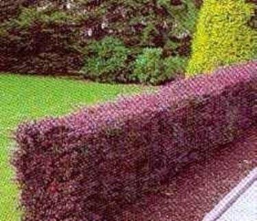 Siepi artificiali da giardino