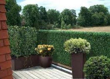 Siepi da terrazzo siepi - Siepi ornamentali da giardino ...