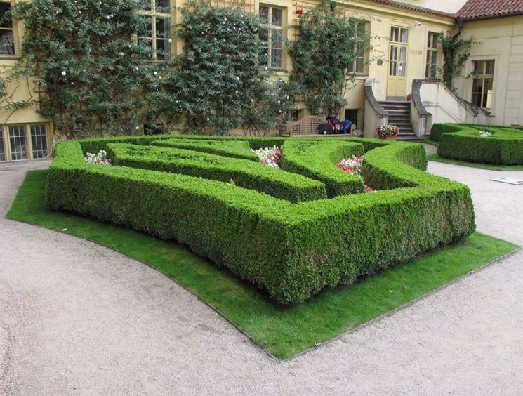 siepi uso ornamentale - siepi - siepi ornamentali - Siepe Da Giardino Piccolo