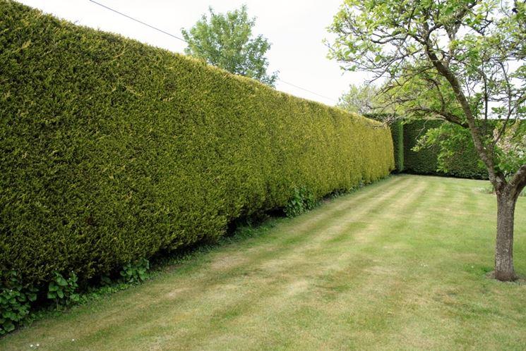 Siepi da confine siepi caratteristiche delle siepi da - Ringhiere per giardino ...