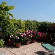 siepe terrazzo verde