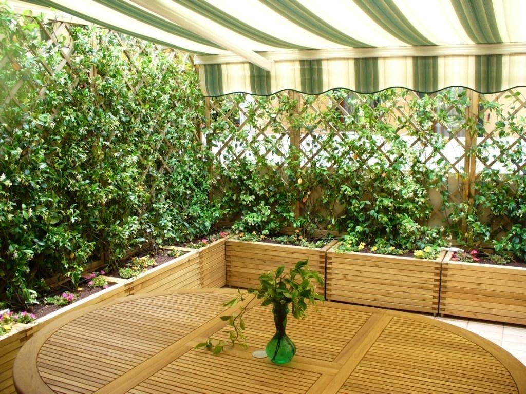 Siepi per terrazzi siepi scegliere la siepe per il for Piante ornamentali da terrazzo