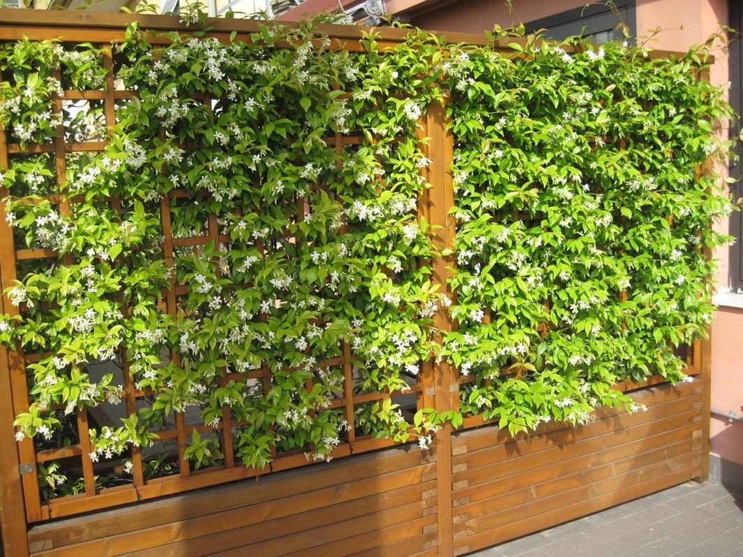 Siepi per terrazzi siepi scegliere la siepe per il for Piante per terrazzi