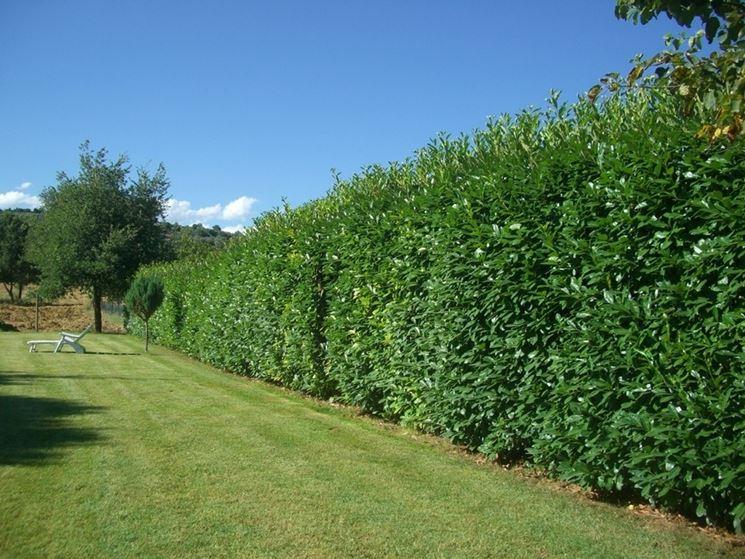 Siepi sintetiche siepi caratteristiche delle siepi - Siepi ornamentali da giardino ...