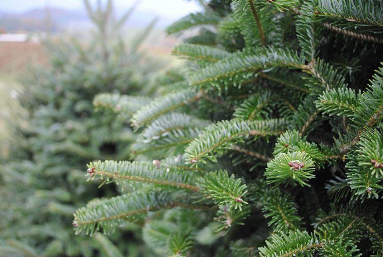 Gli aghi di un albero di Natale
