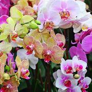foto orchidee