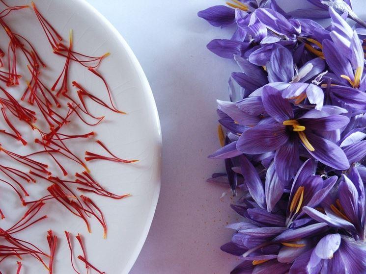 ape posata sul fiore di croco