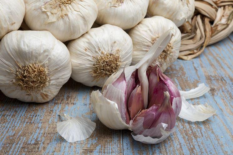 bulbi di aglio su una tavola