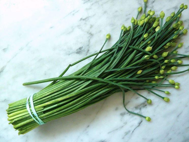 raccolta erba cipollina