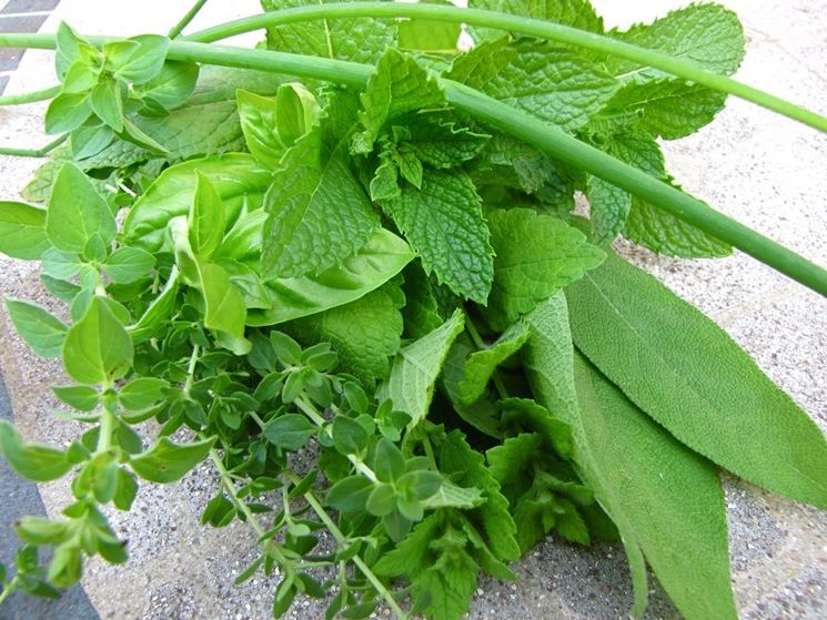 Erbe aromatiche come coltivare aromatiche curare le erbe aromatiche - Compost casalingo ...