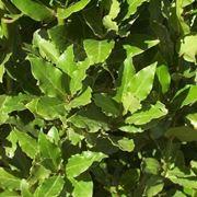 piante aromatiche: l