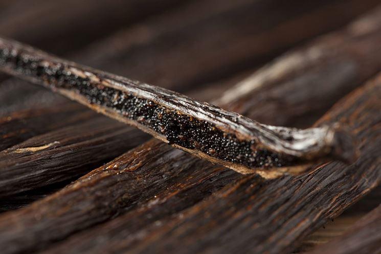 Semi e baccello di vaniglia