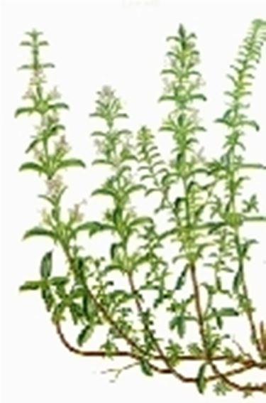 erbe aromatiche 2