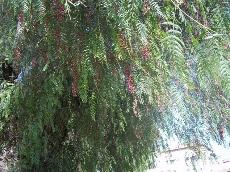 Piante Aromatiche Perenni Elenco : Elenco piante aromatiche le spontanee in cucina e