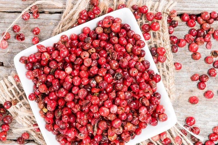 Pepe rosa pianta aromatiche coltivare pepe for Rosa pianta