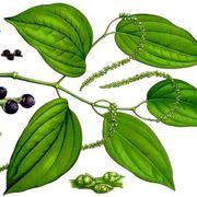 pianta pepe