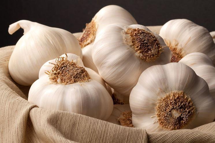 Proprietà officinali dell'aglio