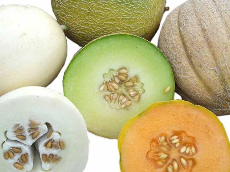 Coltivare meloni raccolta