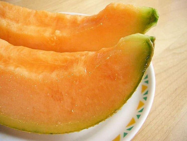 Coltivare meloni malattie