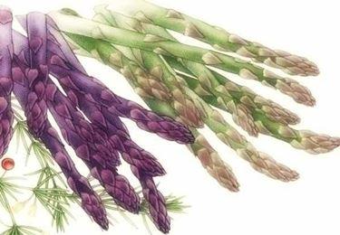 gli asparagi in erboristeria