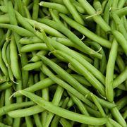 Fagiolini verdi appena raccolti
