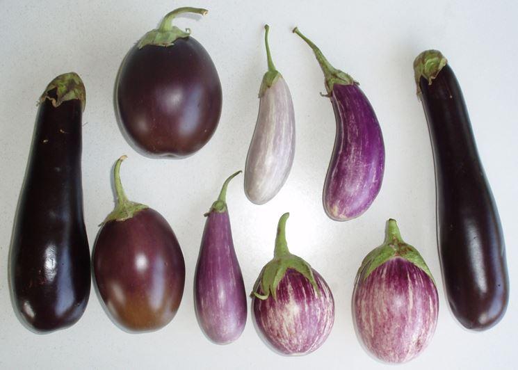 Differenti varietà di melanzane