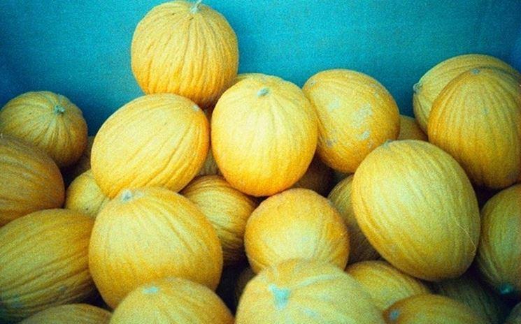 meloni d'inverno