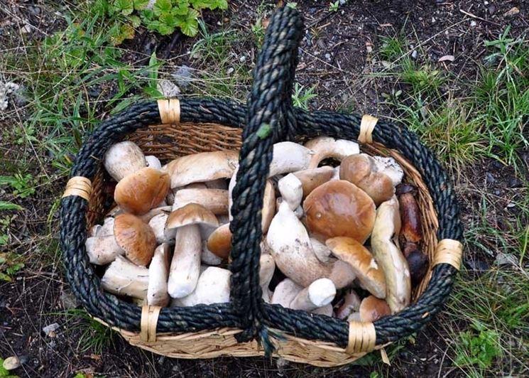 Un cestino pieno di funghi porcini: non sarà facile ottenerlo con la coltivazione casalinga!