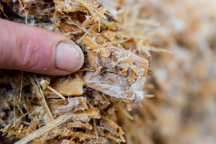 I miceli dei funghi
