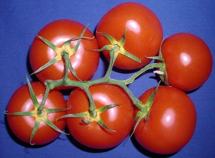 Alcune varietà di pomodoro