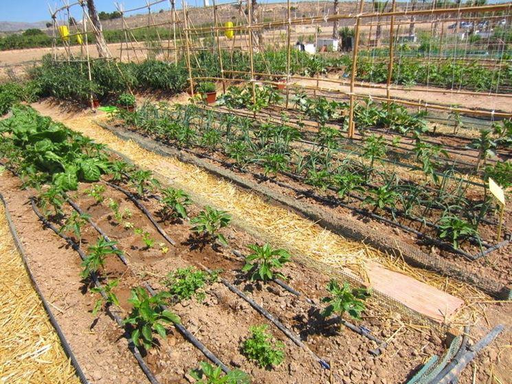 Irrigazione orto coltivare orto come irrigare l 39 orto for Progetto irrigazione